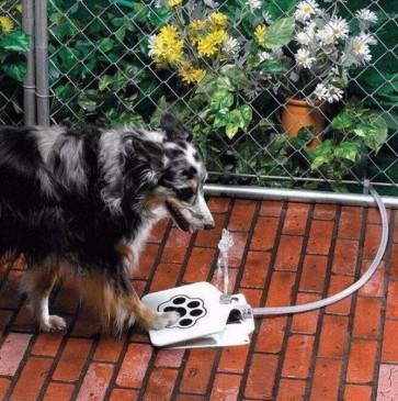 Pasja fontana za vodo - stopi s tačko