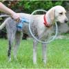Pršilo za umivanje psov